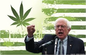 Bernie Will Legalize on Day One