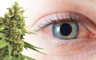 Why Does Cannabis Make Your Eyes Bloodshot