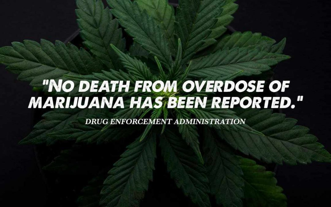 Overdose on Cannabis