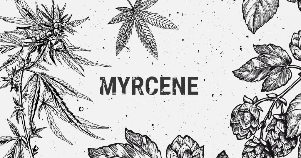 Myrcene Terpene Explained
