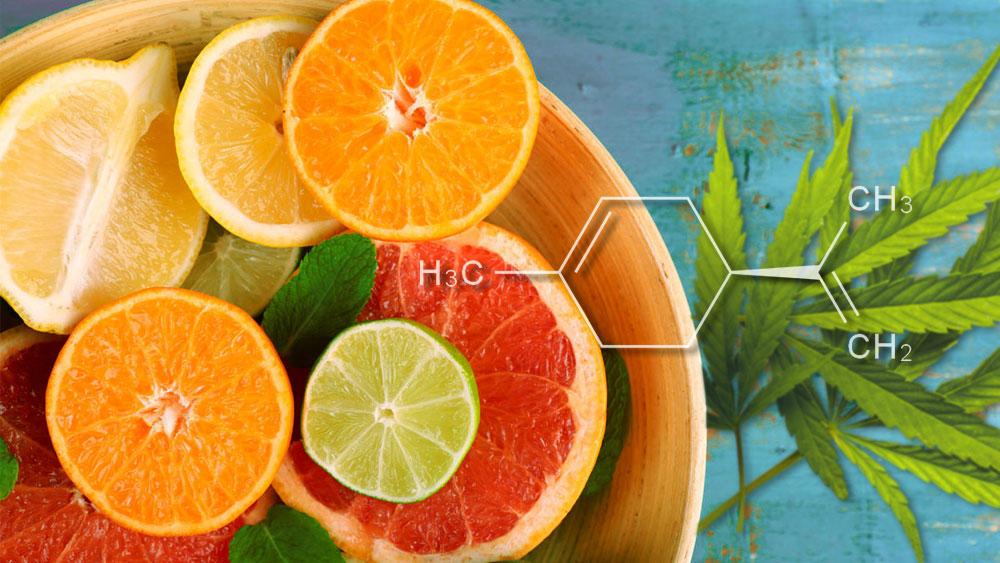 Limonene Terpene Explained