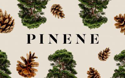 Pinene Terpene Explained