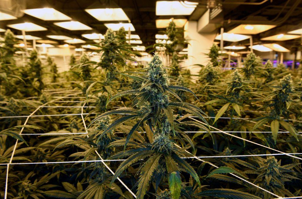 Lawmakers Urge Biden To Issue Mass Marijuana Pardons