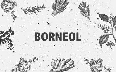 Borneol Terpene Explained