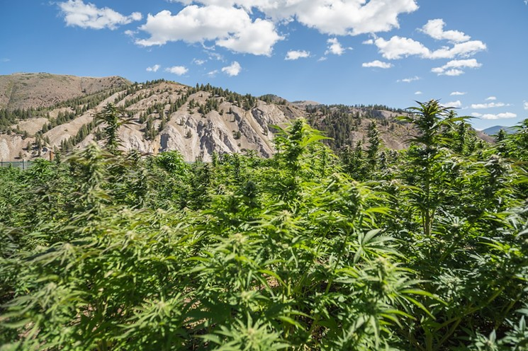Major Cannabis Changes In Denver