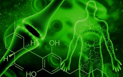 Intro To The Endocannabinoid System