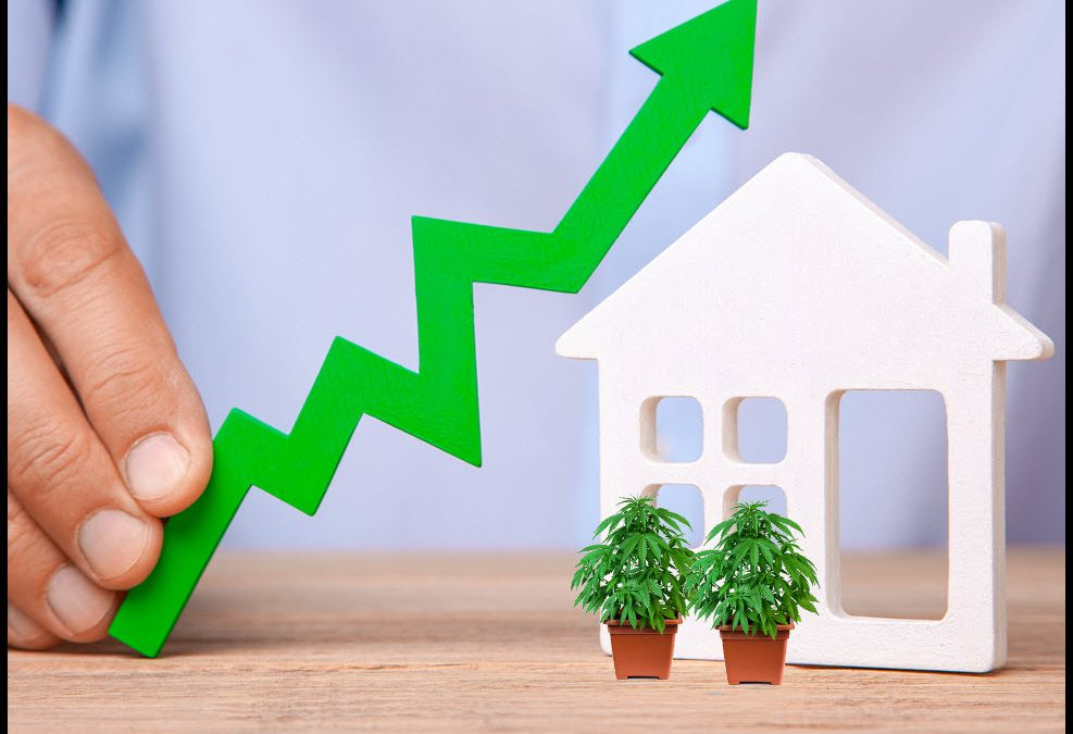Does Legal Cannabis Increase Your Home's Value?