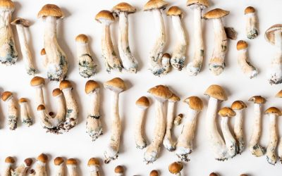 Seattle Is The Largest U.S. City To Decriminalize Psychedelics