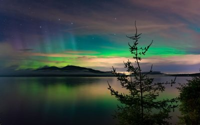Northern Lights Strain Spotlight